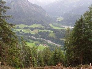 Blick durch eine Ausholzung Richtung Süden